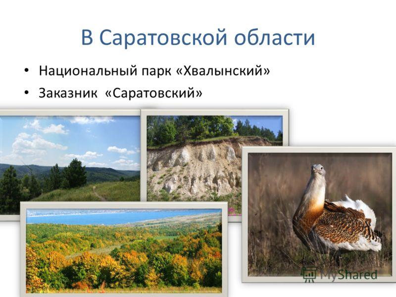 В Саратовской области Национальный парк «Хвалынский» Заказник «Саратовский»