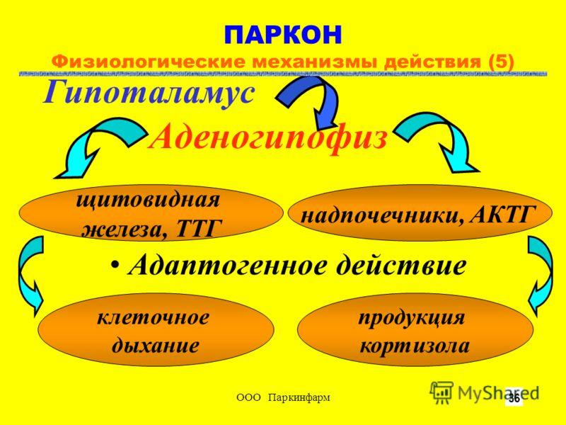 ООО Паркинфарм10 Гипоталамус Аденогипофиз щитовидная железа, ТТГ надпочечники, АКТГ клеточное дыхание продукция кортизола Адаптогенное действие ПАРКОН Физиологические механизмы действия (5)