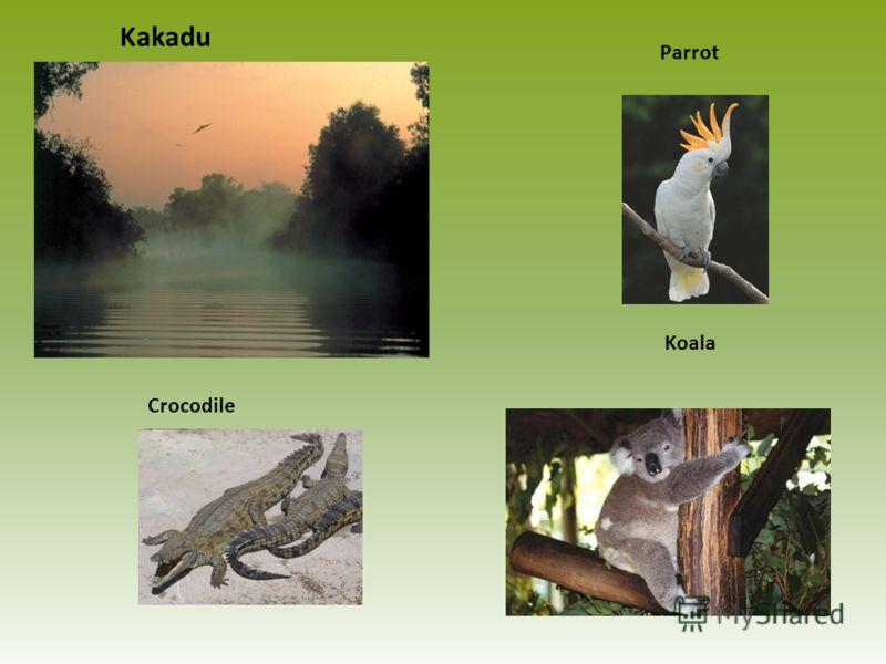 Kakadu Parrot Koala Crocodile