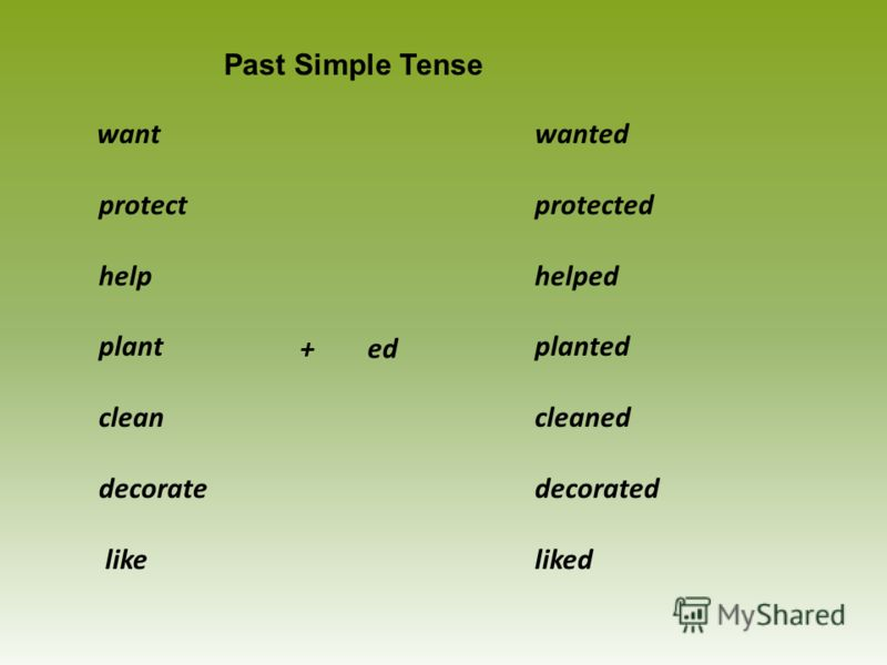 wanted protected helped planted cleaned decorated liked Past Simple Tense want protect help plant clean decorate like + ed