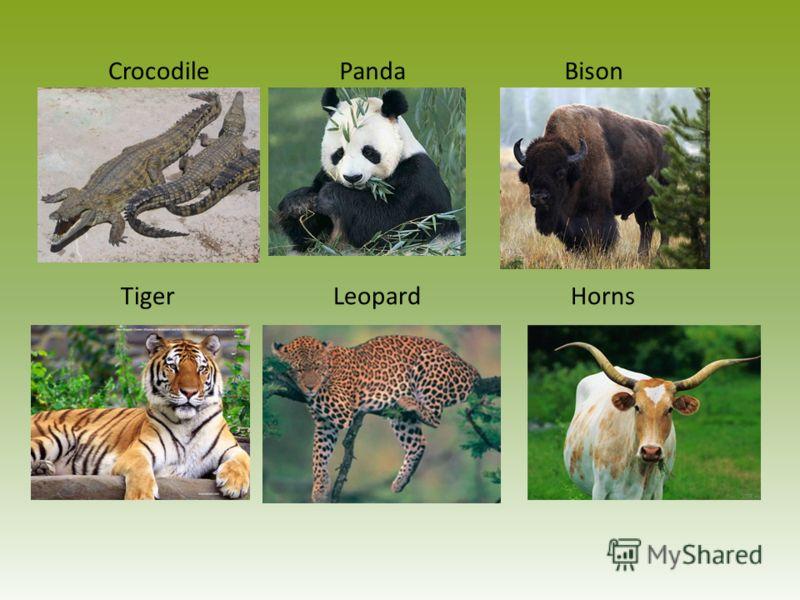 CrocodilePandaBison TigerLeopardHorns