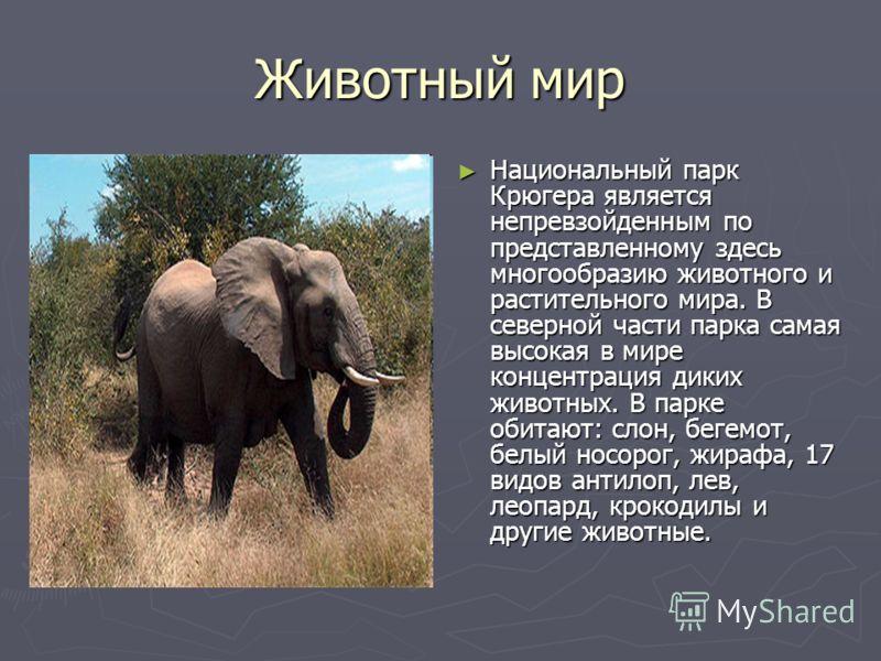 Животный мир Национальный парк Крюгера является непревзойденным по представленному здесь многообразию животного и растительного мира. В северной части парка самая высокая в мире концентрация диких животных. В парке обитают: слон, бегемот, белый носор