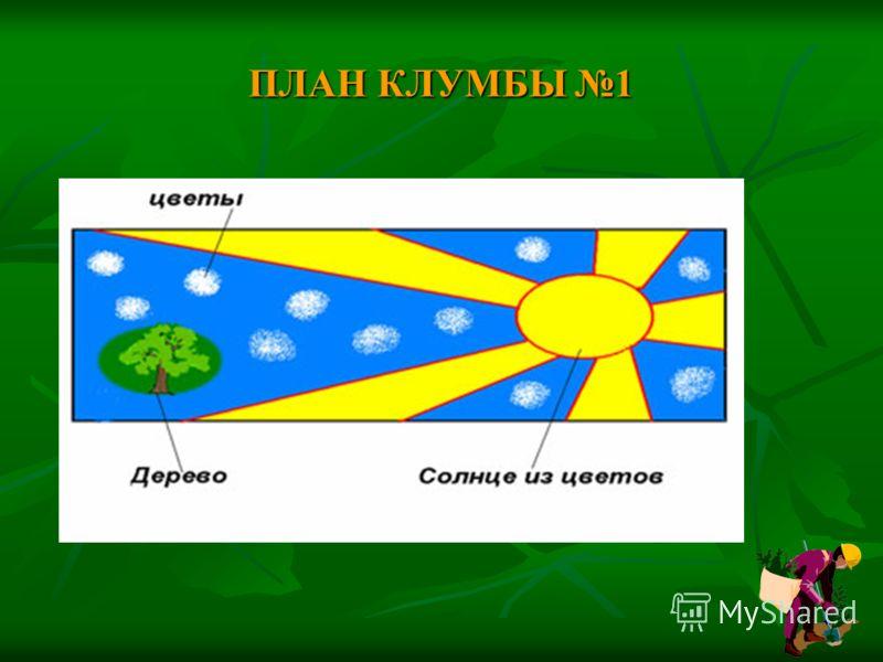 ПЛАН КЛУМБЫ 1