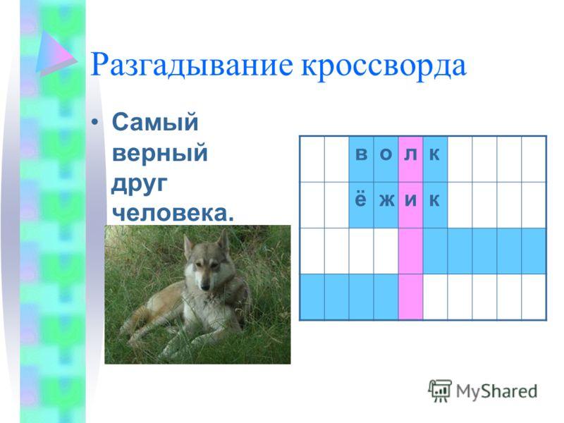 Разгадывание кроссворда Самый верный друг человека. волк ёжик