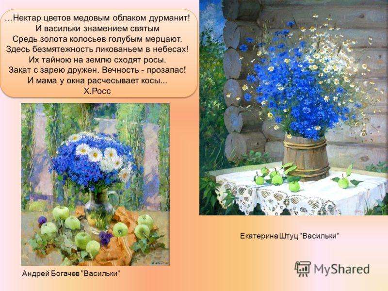 Екатерина Штуц Васильки Андрей Богачев Васильки
