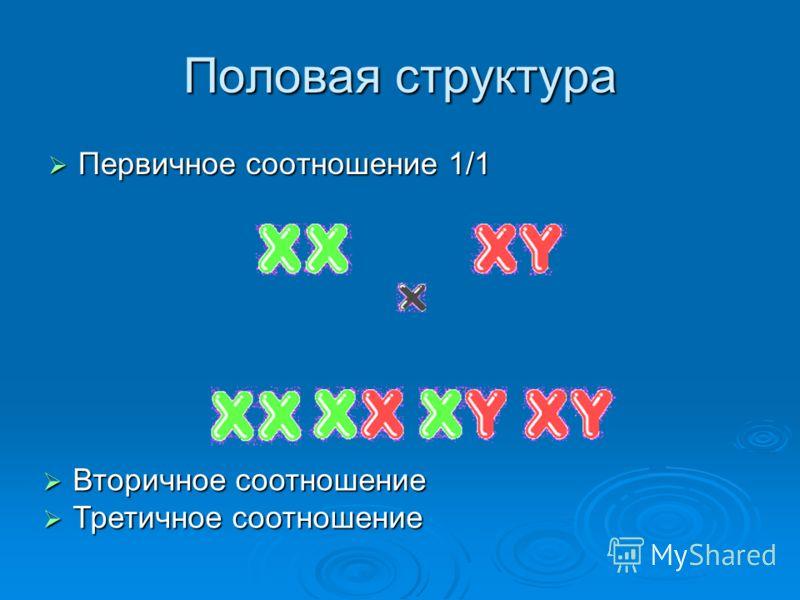 Половая структура Первичное соотношение 1/1 Первичное соотношение 1/1 Вторичное соотношение Вторичное соотношение Третичное соотношение Третичное соотношение