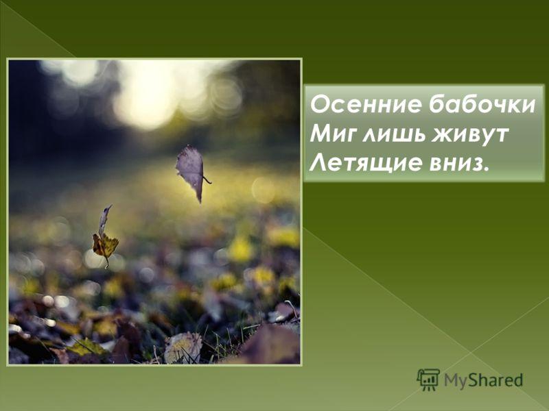 Осенние бабочки Миг лишь живут Летящие вниз.