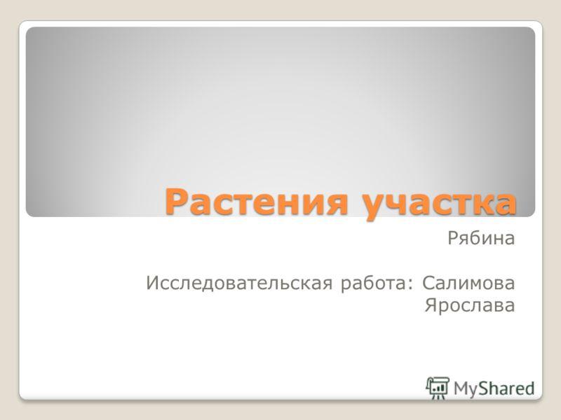 Растения участка Рябина Исследовательская работа: Салимова Ярослава