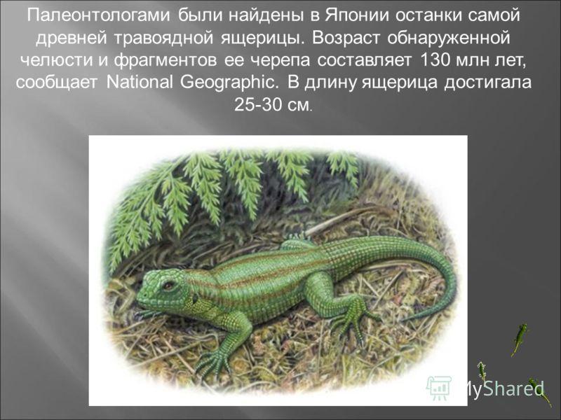 Палеонтологами были найдены в Японии останки самой древней травоядной ящерицы. Возраст обнаруженной челюсти и фрагментов ее черепа составляет 130 млн лет, сообщает National Geographic. В длину ящерица достигала 25-30 см.