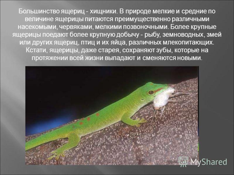 Большинство ящериц - хищники. В природе мелкие и средние по величине ящерицы питаются преимущественно различными насекомыми, червяками, мелкими позвоночными. Более крупные ящерицы поедают более крупную добычу - рыбу, земноводных, змей или других ящер