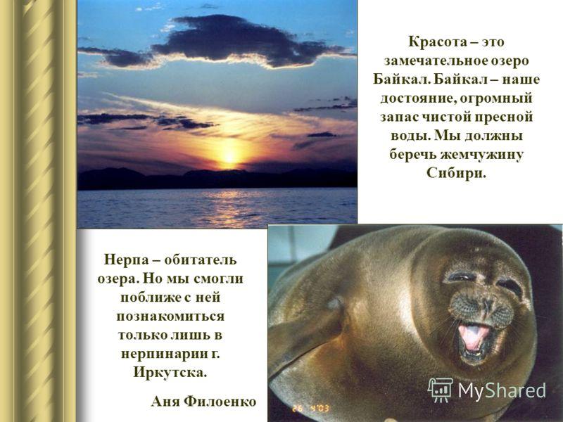 Красота – это замечательное озеро Байкал. Байкал – наше достояние, огромный запас чистой пресной воды. Мы должны беречь жемчужину Сибири. Нерпа – обитатель озера. Но мы смогли поближе с ней познакомиться только лишь в нерпинарии г. Иркутска. Аня Фило