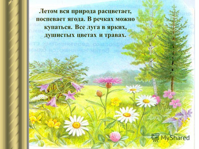 Летом вся природа расцветает, поспевает ягода. В речках можно купаться. Все луга в ярких, душистых цветах и травах.