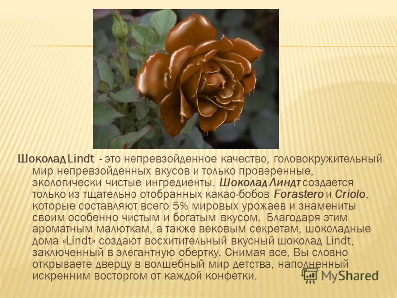 Шоколад Lindt - это непревзойденное качество, головокружительный мир непревзойденных вкусов и только проверенные, экологически чистые ингредиенты. Шоколад Линдт создается только из тщательно отобранных какао-бобов Forastero и Criolo, которые составля