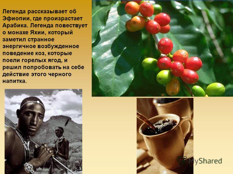 Легенда рассказывает об Эфиопии, где произрастает Арабика. Легенда повествует о монахе Яхии, который заметил странное энергичное возбужденное поведение коз, которые поели горелых ягод, и решил попробовать на себе действие этого черного напитка.