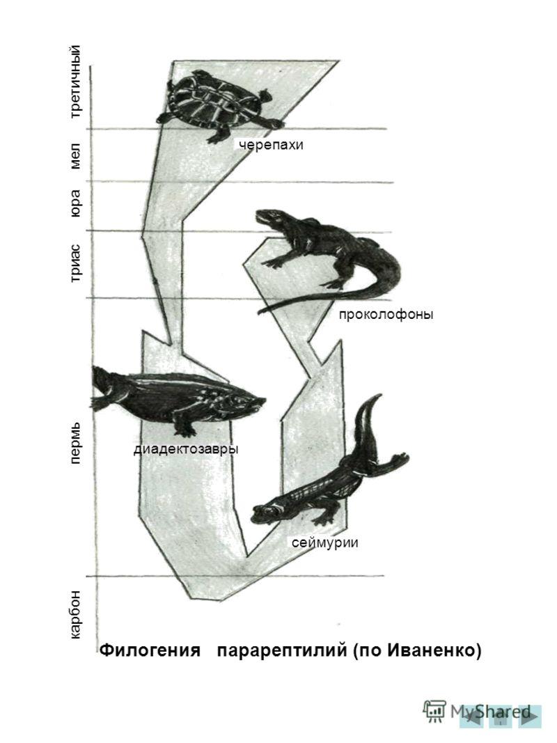 третичный мел юра триас пермь карбон черепахи проколофоны диадектозавры сеймурии Филогения парарептилий (по Иваненко)