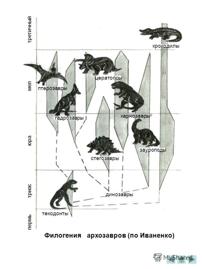 третичный мел юра триас пермь крокодилы цератопсы птерозавры гадрозавры карнозавры зауроподы стегозавры текодонты динозавры Филогения архозавров (по Иваненко)