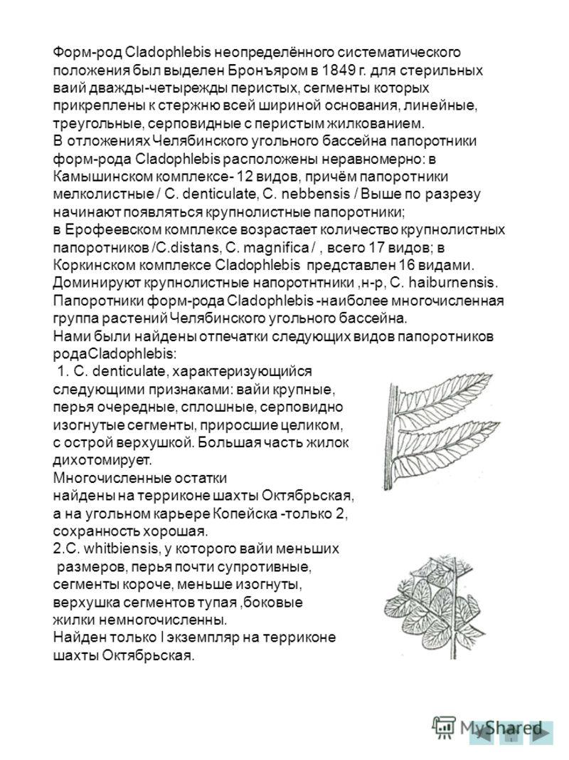 Форм-род Cladophlebis неопределённого систематического положения был выделен Бронъяром в 1849 г. для стерильных ваий дважды-четырежды перистых, сегменты которых прикреплены к стержню всей шириной основания, линейные, треугольные, серповидные с перист