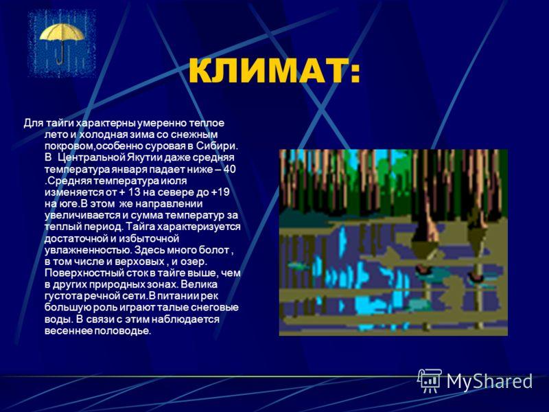 ГЕОГРАФИЧЕСКОЕ ПОЛОЖЕНИЕ: Зона тайги - самая большая по площади природная зона России. Она протянулась широкой непрерывной полосой от западных границ почти до побережья Тихого океана. Наибольшей ширины зона достигает в Средней Сибири ( более 2000 км)