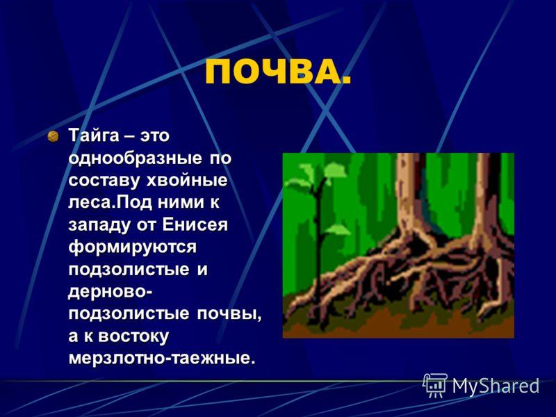 КЛИМАТ: Для тайги характерны умеренно теплое лето и холодная зима со снежным покровом,особенно суровая в Сибири. В Центральной Якутии даже средняя температура января падает ниже – 40.Средняя температура июля изменяется от + 13 на севере до +19 на юге