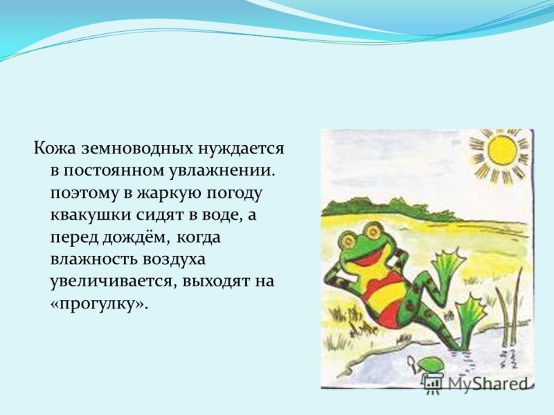 Кожа земноводных нуждается в постоянном увлажнении. поэтому в жаркую погоду квакушки сидят в воде, а перед дождём, когда влажность воздуха увеличивается, выходят на «прогулку».