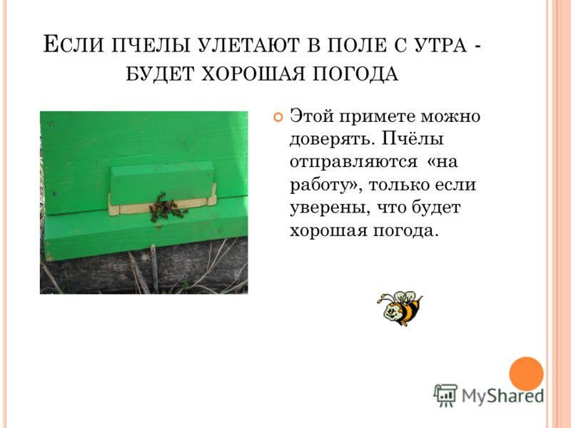 Е СЛИ ПЧЕЛЫ УЛЕТАЮТ В ПОЛЕ С УТРА - БУДЕТ ХОРОШАЯ ПОГОДА Этой примете можно доверять. Пчёлы отправляются «на работу», только если уверены, что будет хорошая погода.