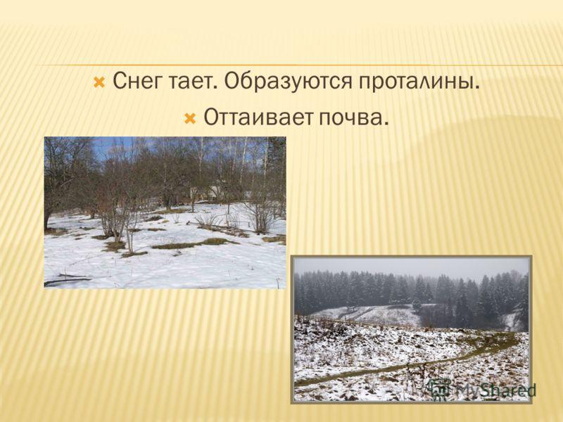 Снег тает. Образуются проталины. Оттаивает почва.