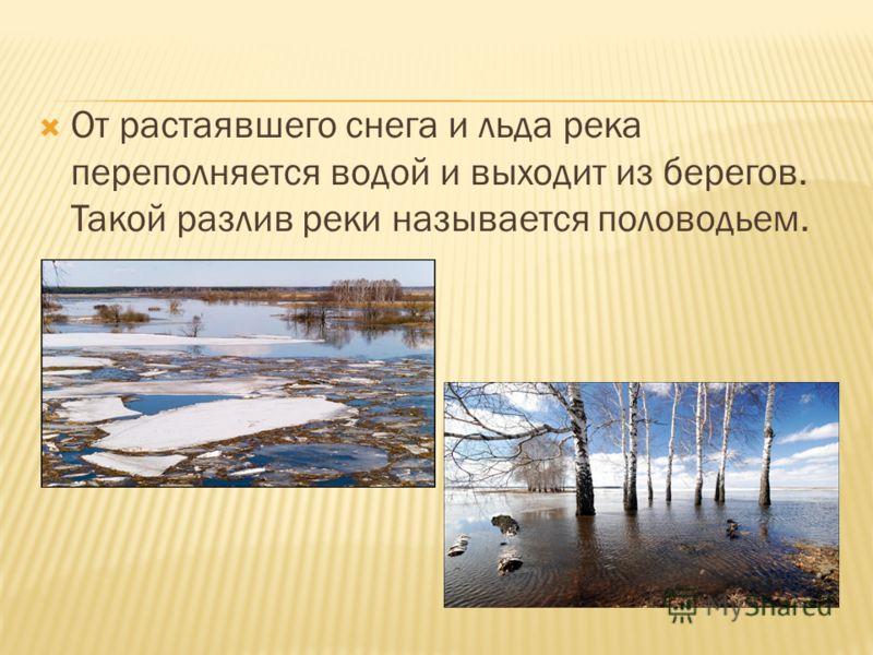 От растаявшего снега и льда река переполняется водой и выходит из берегов. Такой разлив реки называется половодьем.