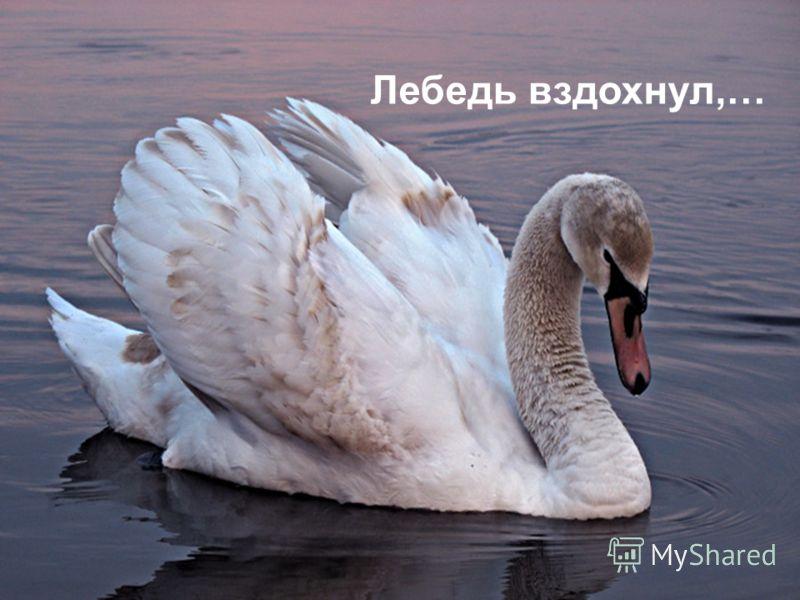 Лебедь вздохнул,…