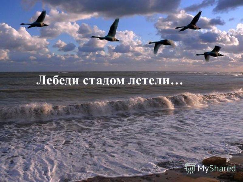 Лебеди стадом летели…