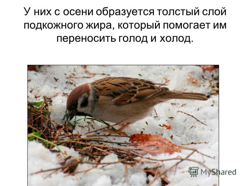 Эту группу составляют все оседлые птицы и птицы, прикочевавшие в данную местность на зимовку.