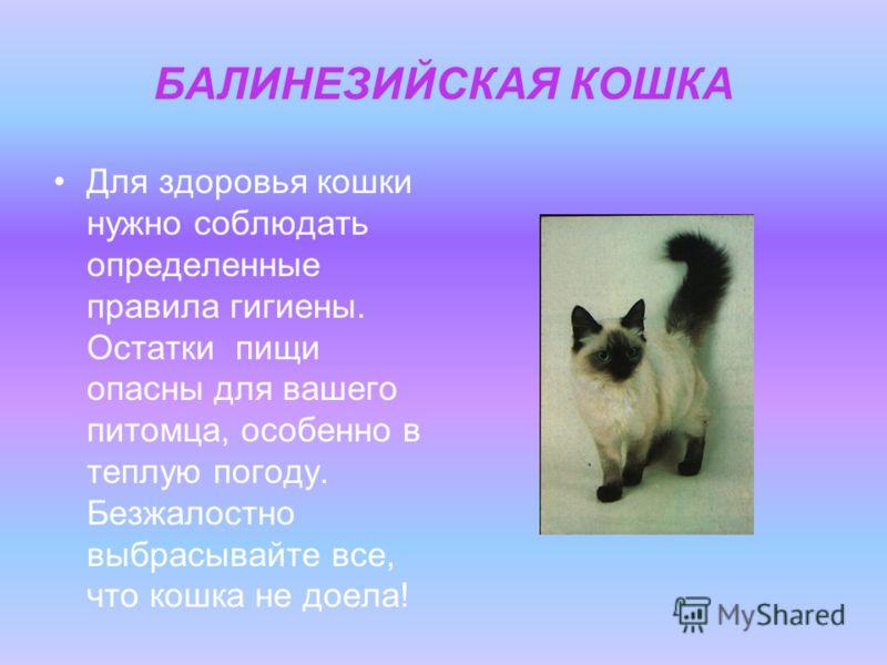 БАЛИНЕЗИЙСКАЯ КОШКА Для здоровья кошки нужно соблюдать определенные правила гигиены. Остатки пищи опасны для вашего питомца, особенно в теплую погоду. Безжалостно выбрасывайте все, что кошка не доела!