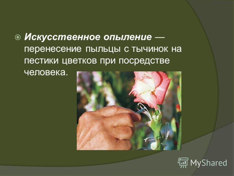 Искусственное опыление перенесение пыльцы с тычинок на пестики цветков при посредстве человека.