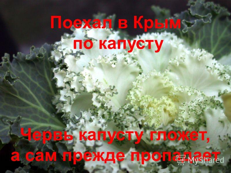 Червь капусту гложет, а сам прежде пропадает Поехал в Крым по капусту
