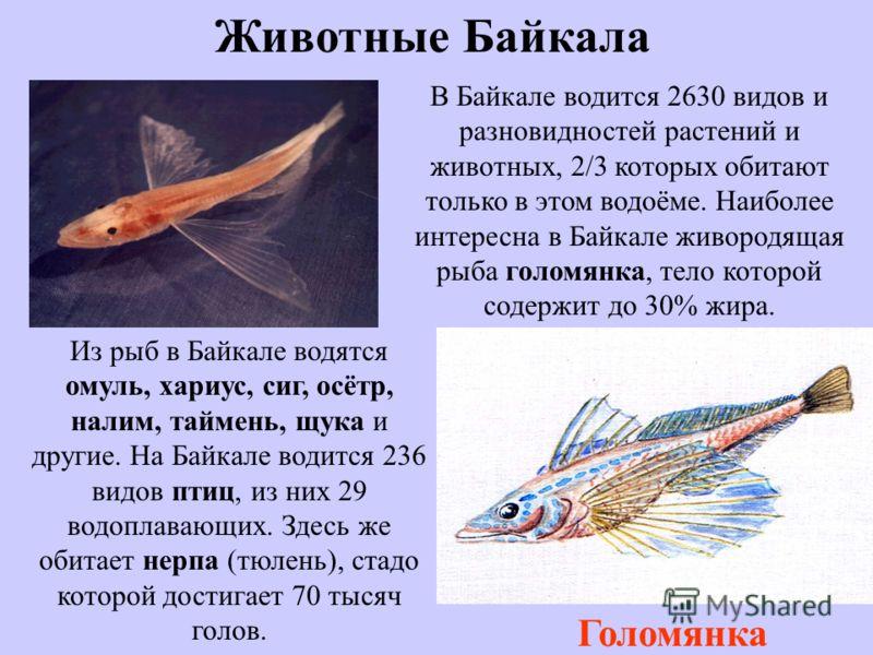 Вода озера В Байкал впадает 544 водотока. На территории Байкала находится 22 острова. Наиболее крупный и интересный из них остров Ольхон. Температура поверхностных слоёв воды в Байкале летом + 8°... +9°С, а в отдельных заливах +15°С. Температура глуб