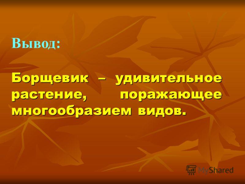 Вывод: Борщевик – удивительное растение, поражающее многообразием видов.