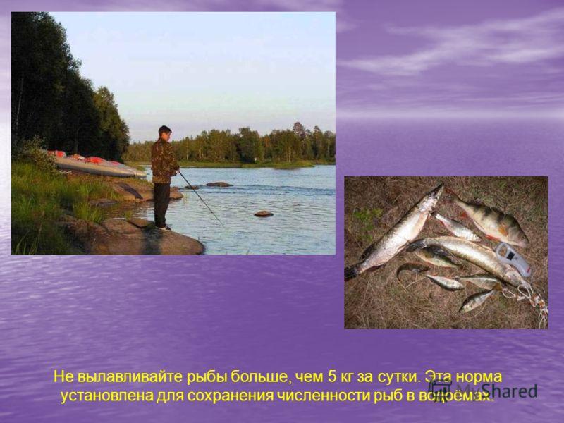 Не вылавливайте рыбы больше, чем 5 кг за сутки. Эта норма установлена для сохранения численности рыб в водоёмах.