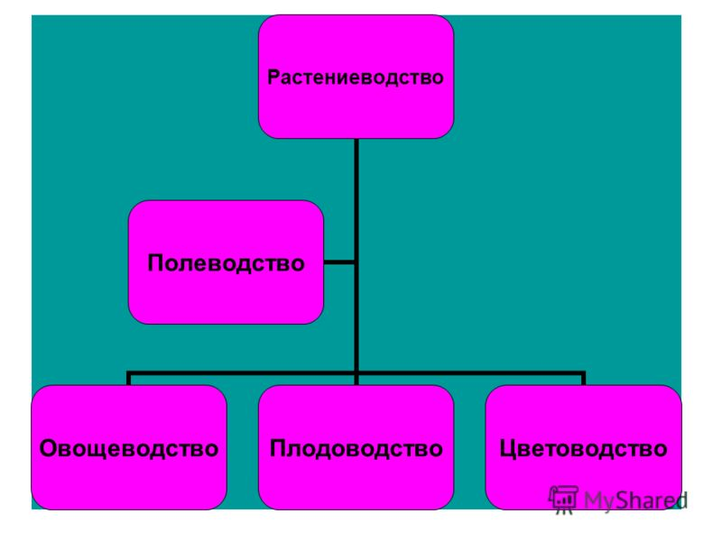 Растениеводство ОвощеводствоПлодоводствоЦветоводство Полеводство