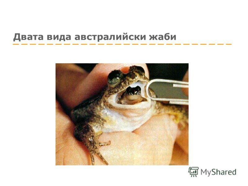 Двата вида австралийски жаби