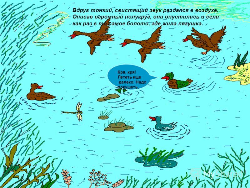 Вдруг тонкий, свистящий звук раздался в воздухе. Описав огромный полукруг, они опустились и сели как раз в то самое болото, где жила лягушка. Кря, кря! Лететь еще далеко. Надо покушать.