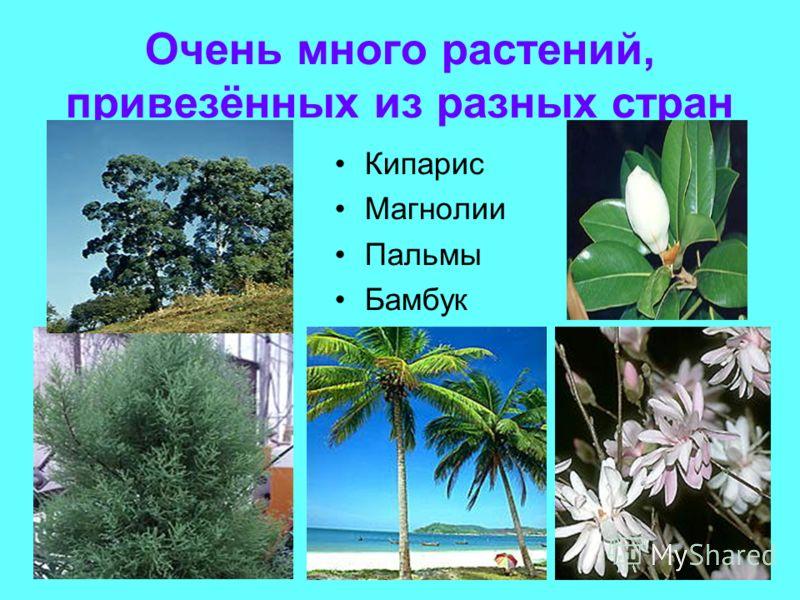 Очень много растений, привезённых из разных стран Кипарис Магнолии Пальмы Бамбук