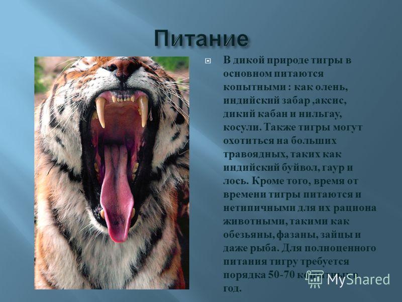 чему описание характера деревянного тигра объявления продаже студию