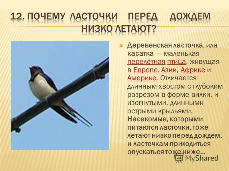 Деревенская ласточка, или касатка маленькая перелётная птица, живущая в Европе, Азии, Африке и Америке. Отличается длинным хвостом с глубоким разрезом в форме вилки, и изогнутыми, длинными острыми крыльями. Насекомые, которыми питаются ласточки, тоже