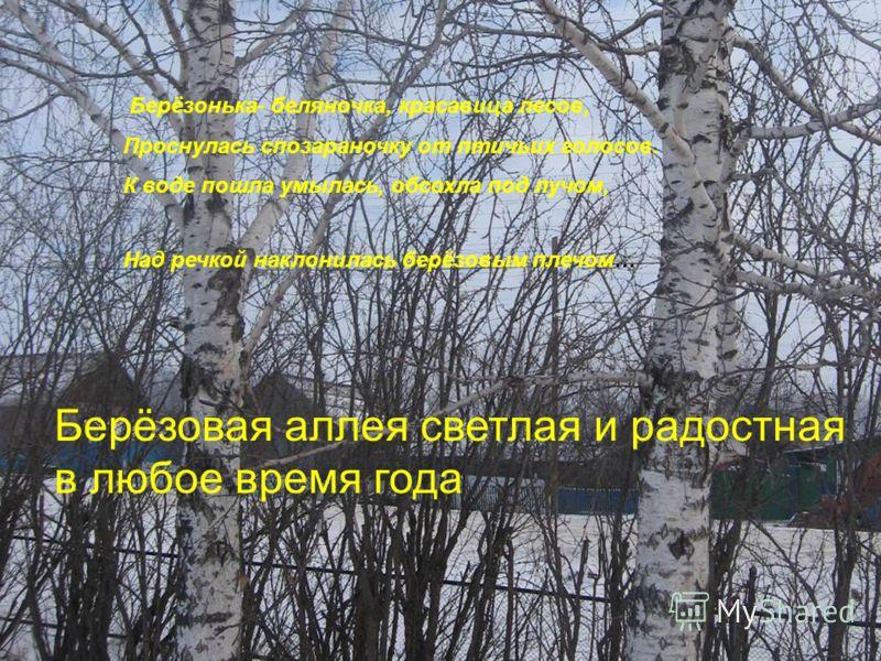 Берёзонька- беляночка, красавица лесов, Проснулась спозараночку от птичьих голосов. К воде пошла умылась, обсохла под лучом, Над речкой наклонилась берёзовым плечом… Берёзовая аллея светлая и радостная в любое время года