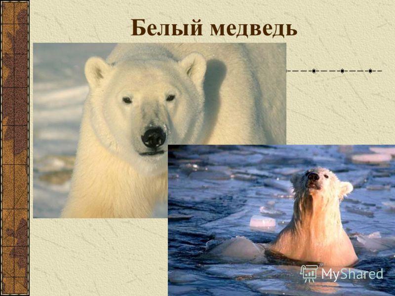 Мир Северного Ледовитого океана