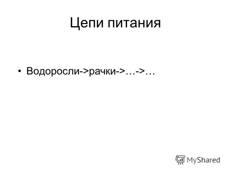 Цепи питания Водоросли->рачки->…->…