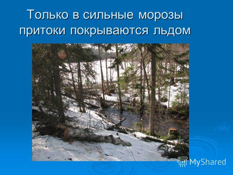 Только в сильные морозыпритоки покрываются льдом