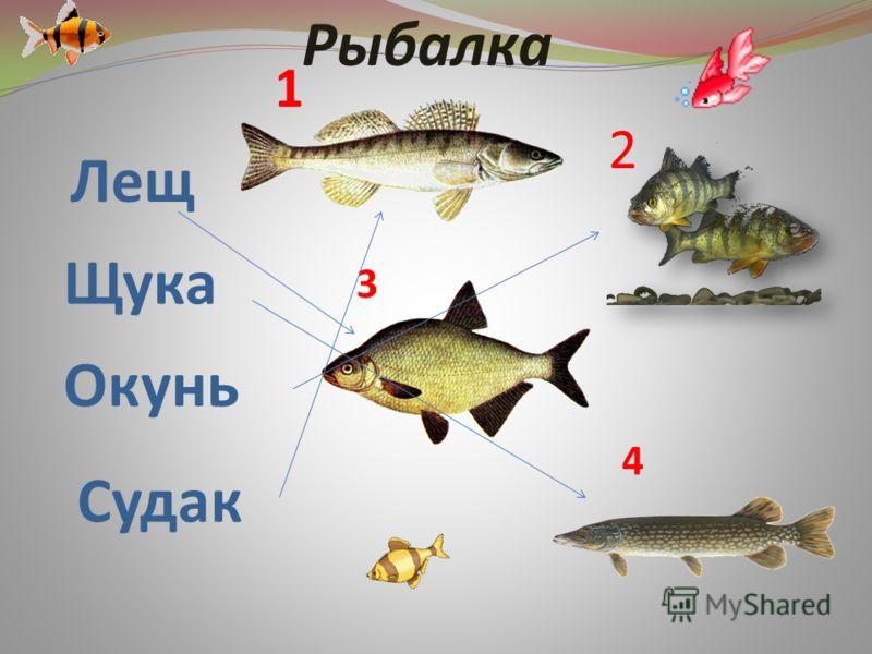 Лещ Щука Окунь Судак 1 2 3 4 Рыбалка