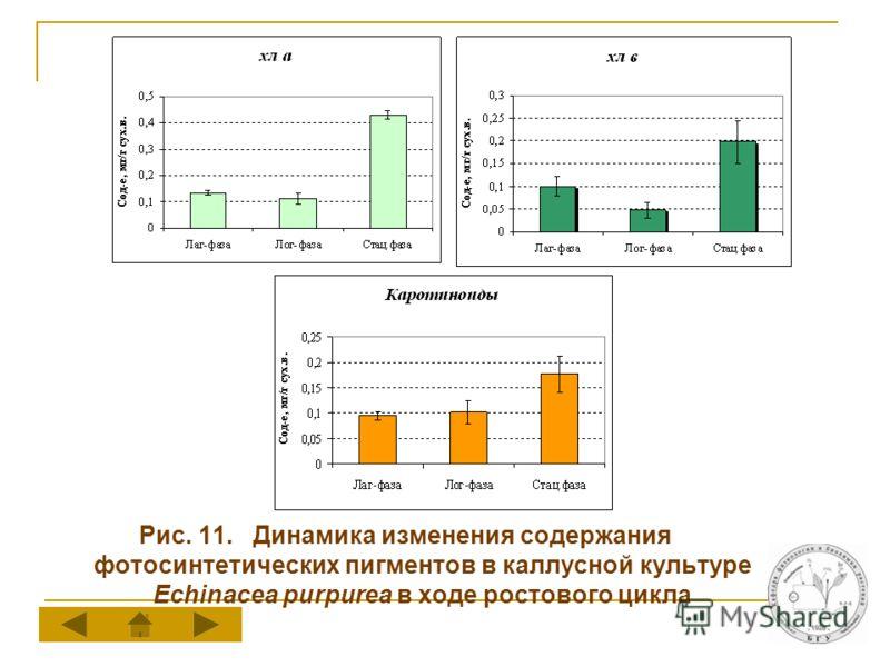 Рис. 11. Динамика изменения содержания фотосинтетических пигментов в каллусной культуре Echinacea purpurea в ходе ростового цикла