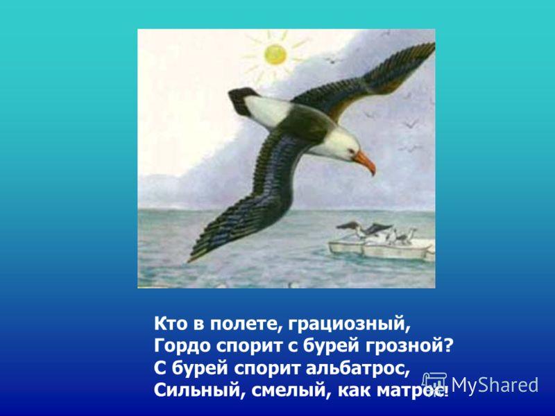 Кто в полете, грациозный, Гордо спорит с бурей грозной? С бурей спорит альбатрос, Сильный, смелый, как матрос !