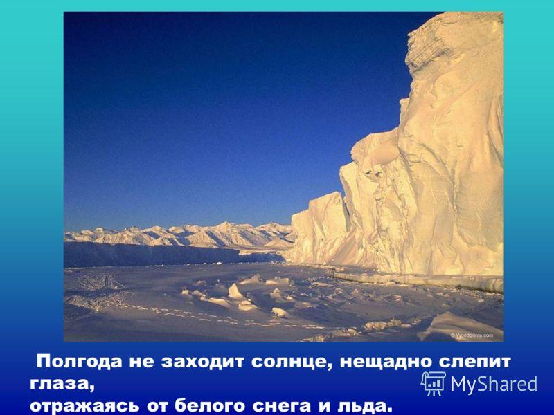 Полгода не заходит солнце, нещадно слепит глаза, отражаясь от белого снега и льда.